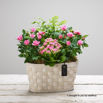 Mothers Day Pink Planted Basket