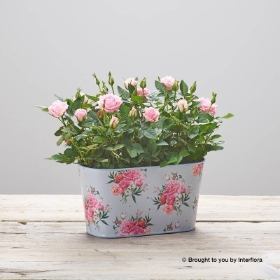 Flourishing Rose Tin