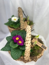 Rustic spring planted basket